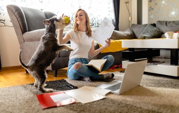 Journée mondiale des animaux : top 6 des infos/intox sur l'assurance de votre animal de compagnie